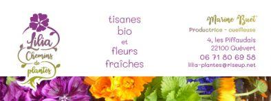miniature 2 pour le portfolio lilia-chemins-de-plantes-identite-emballage-produit